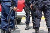 Polis morelianos