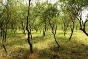 bosques michoacán