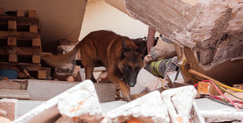 Hueso, perro mestizo rescatado por la UNAM que salva vidas